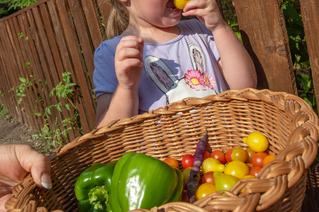 A child eats vegetables in a garden
