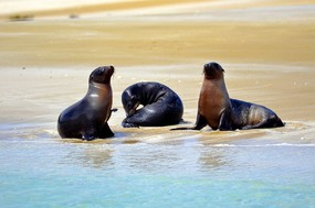 Sea Lions on beach San Cristobal Island.jpg