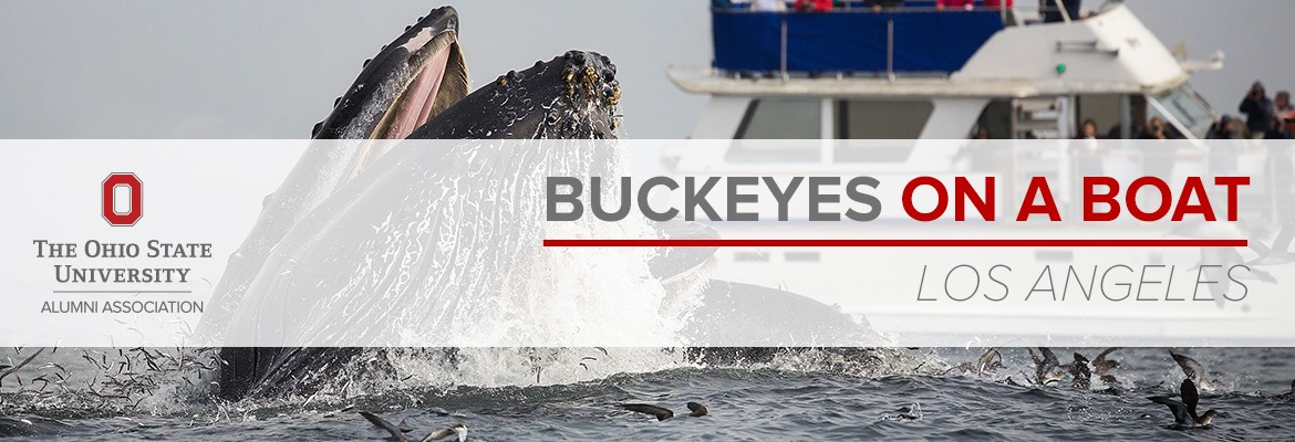 Whales, Dolphins, Buckeyes and more!