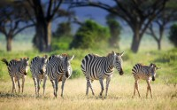 Best of Tanzania Migration Safari
