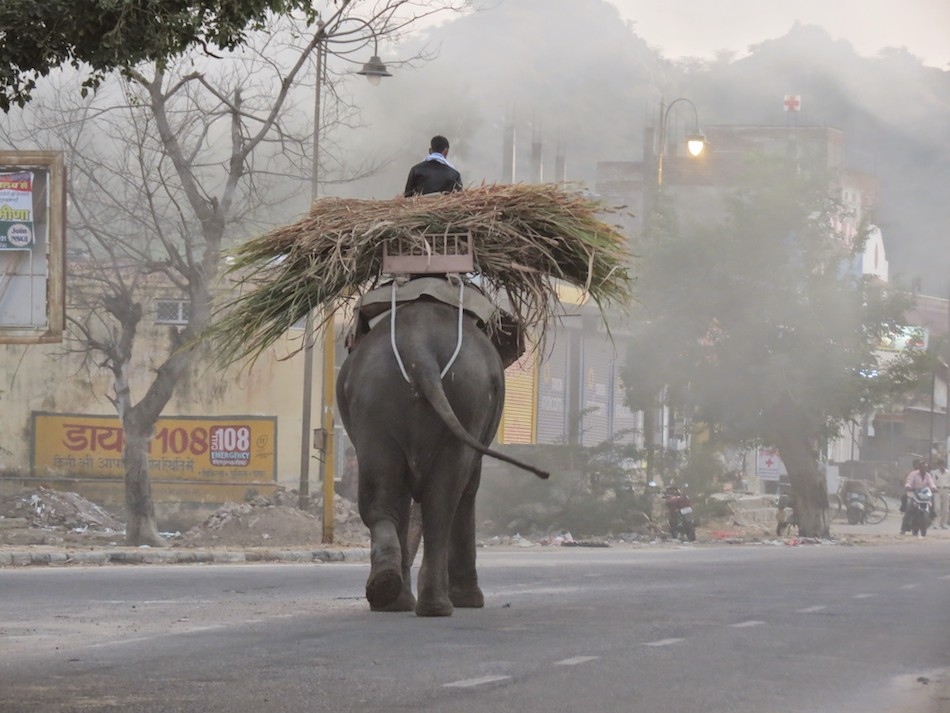 Elephant Working at Dusk