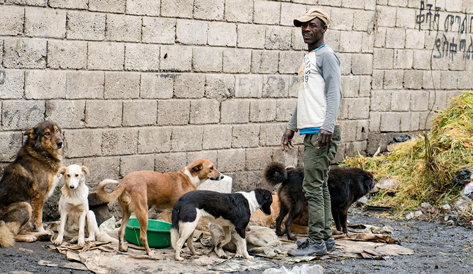 A man in Ethiopia cares for a group of dogs