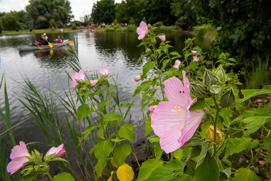 Flowers and a lake where people are paddling in canoes
