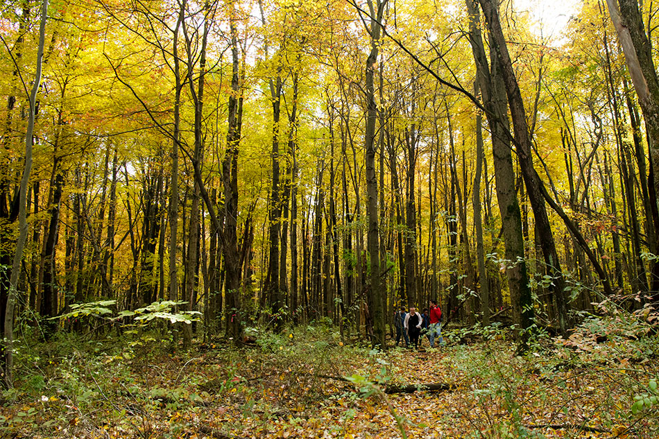 Students walk through a forested path