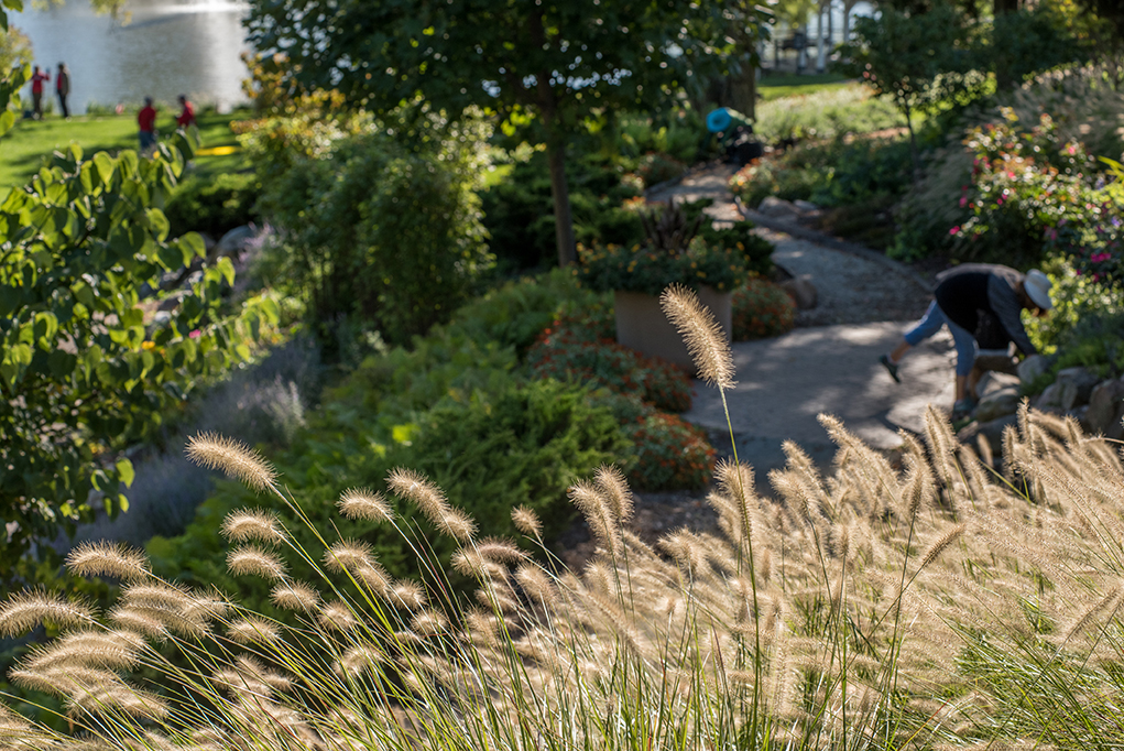 Ornamental grass and ferns are among plants that line pathways through the gardens.