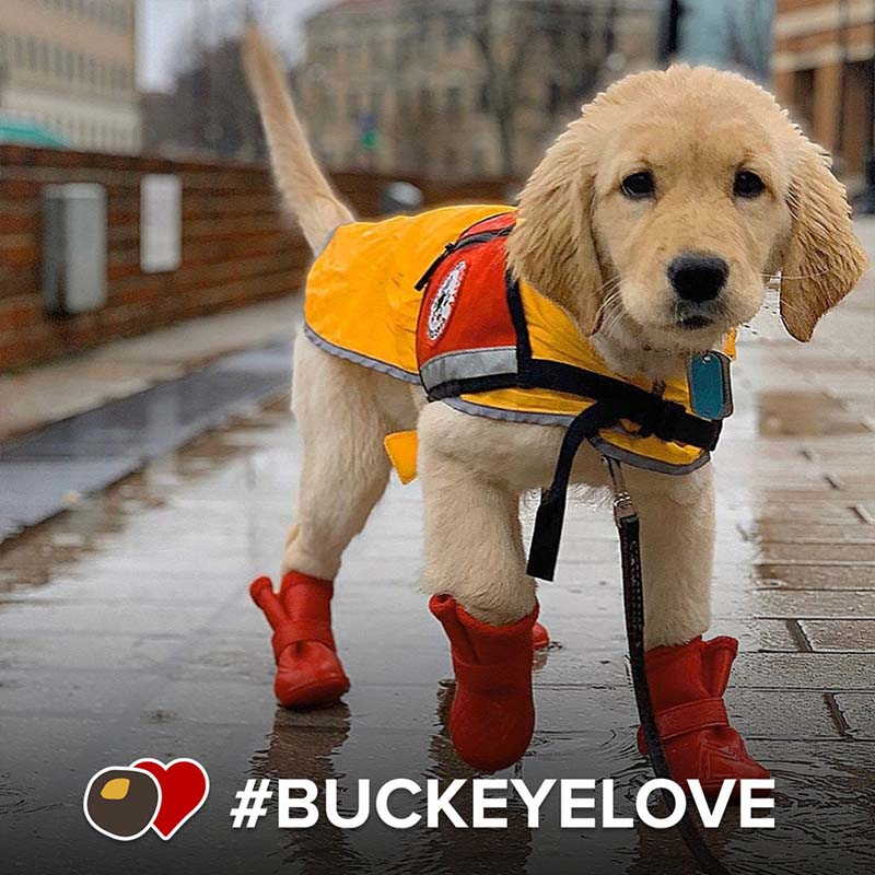 A photo featuring a service dog in training braving the weather.