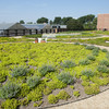 The green roof at Howlett Hall was the first publicly accessible green roof at Ohio State.