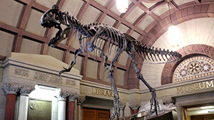 Dinosaur skeleton at Orton Hall
