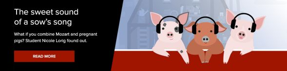 Researching the Effects of Classical Music on Farmed Pigs