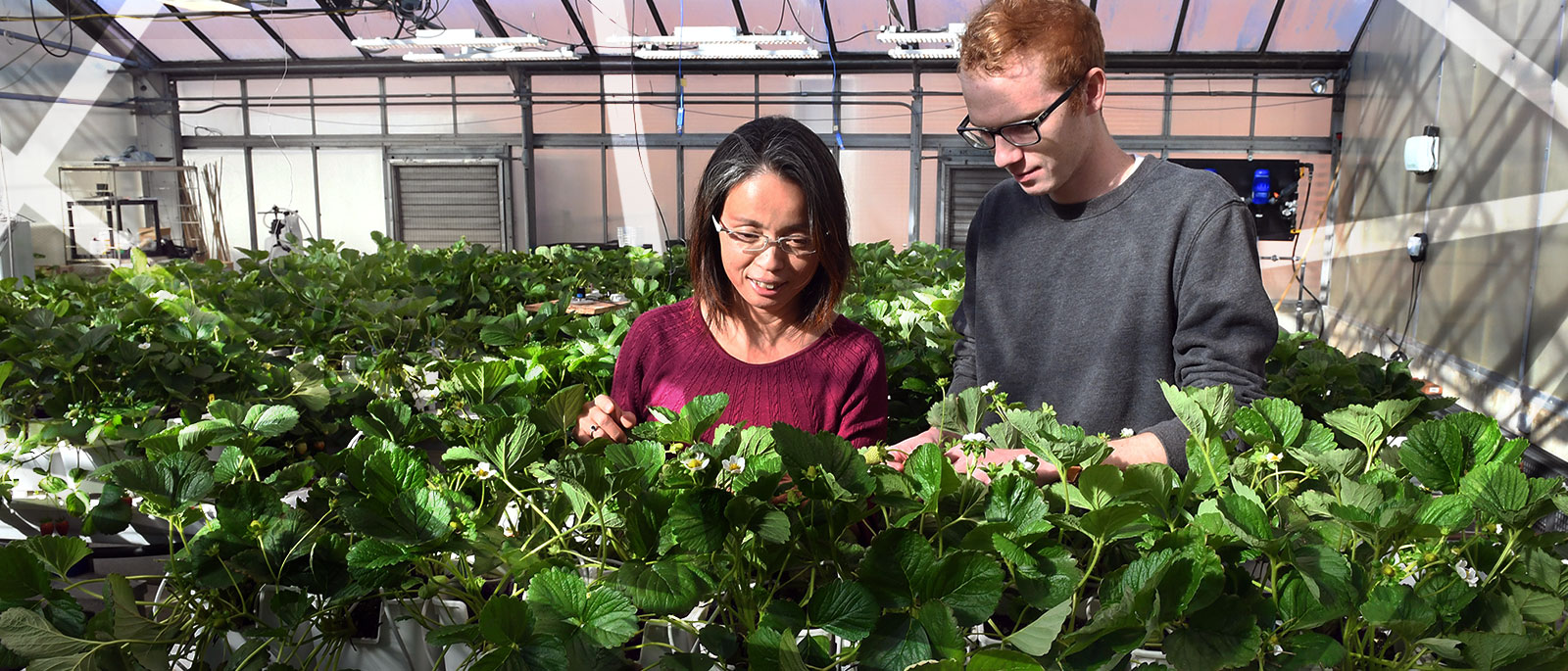 Ohio State Professor Chieri Kubota and a student examine crops grown using hydroponics inside a campus greenhouse.