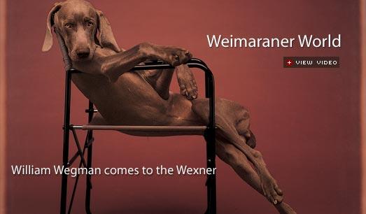 Wegman s famous Weimaraner